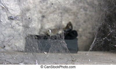 Mummy behind spider web - Scary decomposed corpse of animal...