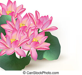 Background with pink vector lotus - Realistic vector pink...