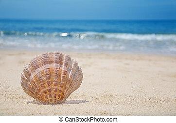 Seashell on a beach - Beautiful seashell on a sandy beach by...