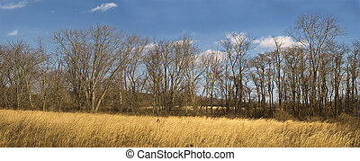 Field and Forest - A panoramic view of a field and wooded...