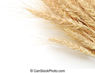 Wheat Bunch - ears of wheat on a white background
