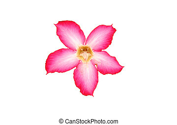 Five pink flower petals - Di-cut of pink flower
