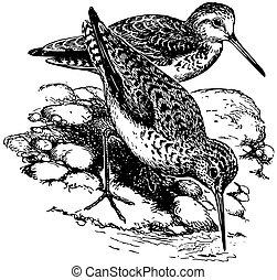 Bird Marsh Sandpiper - Birds Marsh Sandpiper