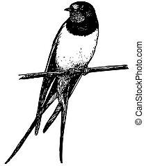 oiseau, grange, hirondelle