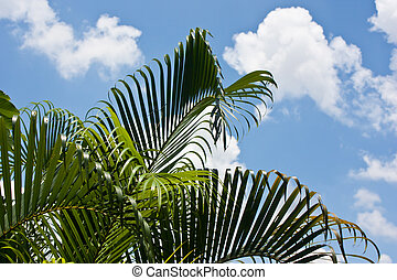 palm leaves with blue sky