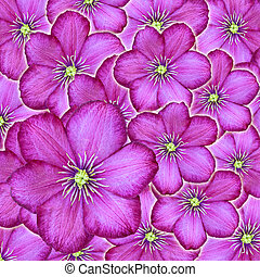 Flowers of clematis background