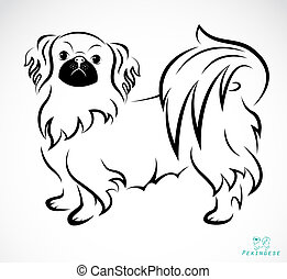 Vector image of an Dog (Pekingese) on white background