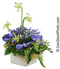 buquet, orquídeas, árabe, estrela, flor,...