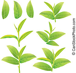 Green tea - flower and leaves of green tea