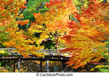 Fall Foliage in Nagoya, Japan - Fall foliage at in Nagoya,...