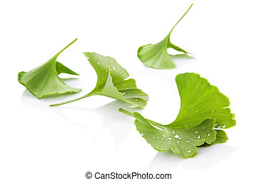 Ginkgo leaves - Ginkgo leaves with water droplets isolated...