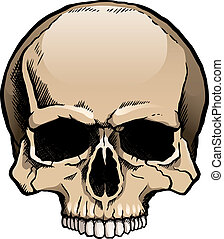 Colored human skull without a lower jaw