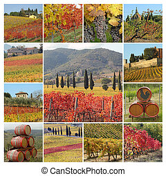autumnal tuscan vineyards collage, Italy, Europe