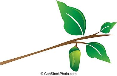 casulo, penduradas, árvore, ramo