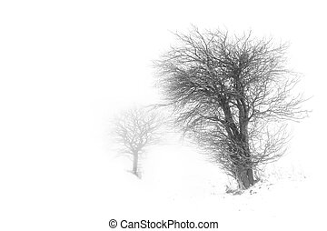 Trees in snow barren winter landscape
