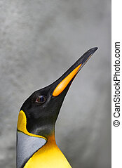 proud portrait of a male king penguin