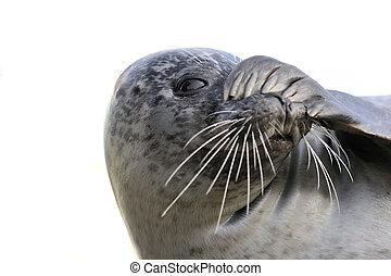 peek-a-boo seal