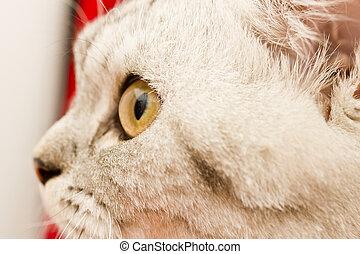 ojos, gato