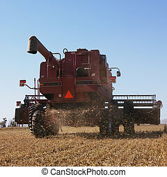 Combine harvesting soybeans. - Back view of combine...