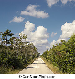 Florida Everglades road. - Road surrounding by growth in...