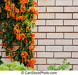 Orange flowers on light brick wall