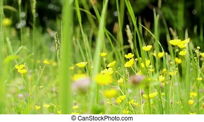 wildflowers - HD1080: wildflowers Blurred Motion dolly shot...