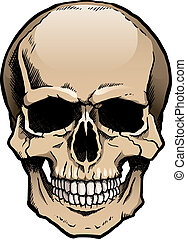 Colored human skull with jaw - Colored human skull with a...