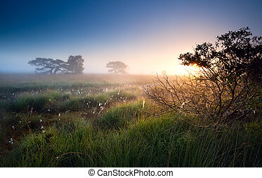 sunrise over swamps with cotton-grass, Fochteloerveen,...