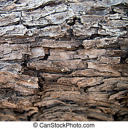 Velvet Mesquite Pattern - The bark of a velvet Mesquite...
