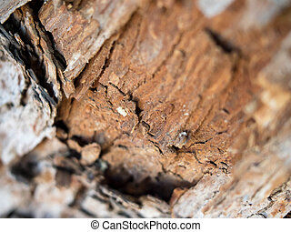 Fresh Mesquite Wood - A fresh wound in a mesquite tree...
