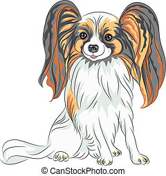 vector pedigreed dog Papillon breed - color sketch Papillon...