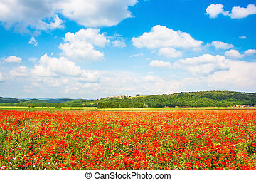 Beautiful landscape with field of red poppy flowers and blue...