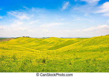 Beautiful Tuscany landscape with field of flowers in Val d'Orcia, Italy