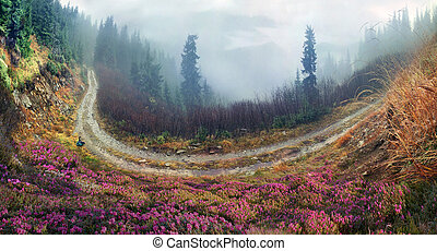 Rhododendrons of Carpathians - On the tops of the...