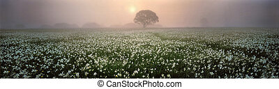 Narcissus Valley - Spring valley near the city of Hust...