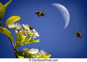 Bees Flying Around Flowers - Several Honey Bees Flying...