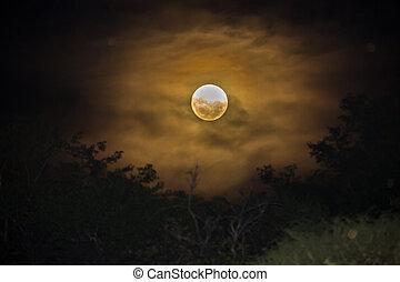 Eerie moon - Mysterious, dark scene - eerie moon behind some...