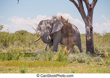 Elephant throwing up dust - Huge elephant standing by a tree...
