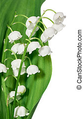 Spring flowers: lily-of-the-valley isolated on white