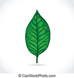 Magnolia leaf detailed sketch - illustration