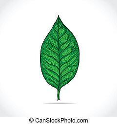 Magnolia leaf detailed sketch - illustration