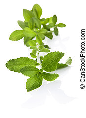 Stevia sugar leaf isolated. - Stevia sugar leaf isolated on...