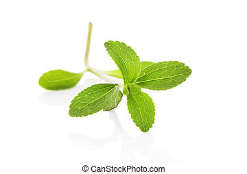 Sugarleaf stevia. - Sugarleaf stevia herb isolated on white...