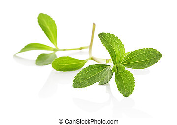 Stevia sugarleaf isolated. - Stevia sugarleaf isolated on...