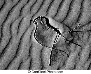Bird Pattern in Sand - Patterns in sand