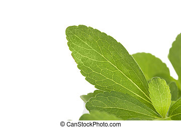 Stevia, sweetleaf - Stevia herb, sweetleaf isolated on white...