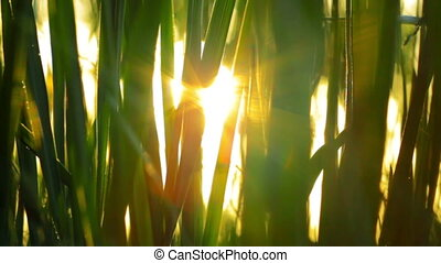 the rays of the sun through the gre