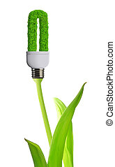 eco energy bulb isolated