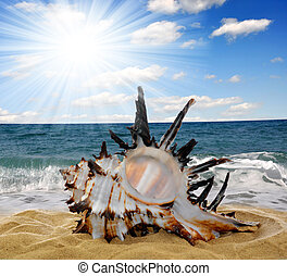 Conch shell on beach - Conch shell on the beach