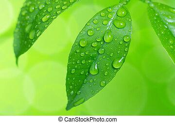 água, gotas, verde, folhas
